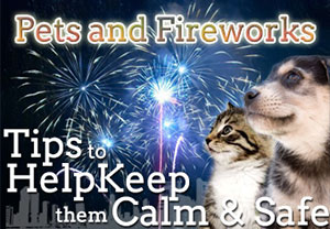Pet Advice On Fireworks